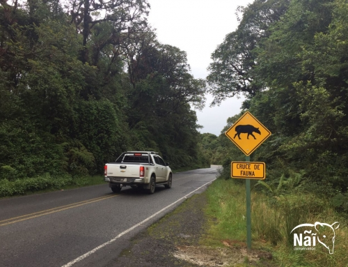 Tapir Crossing Signs will prevent collisions with vehicles in Costa Rica